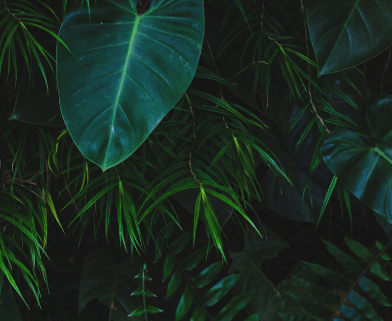 Nu Skin is changing everything about the way they do business to make it a little more green and less wasteful. Here's a summary of their sustainability efforts.