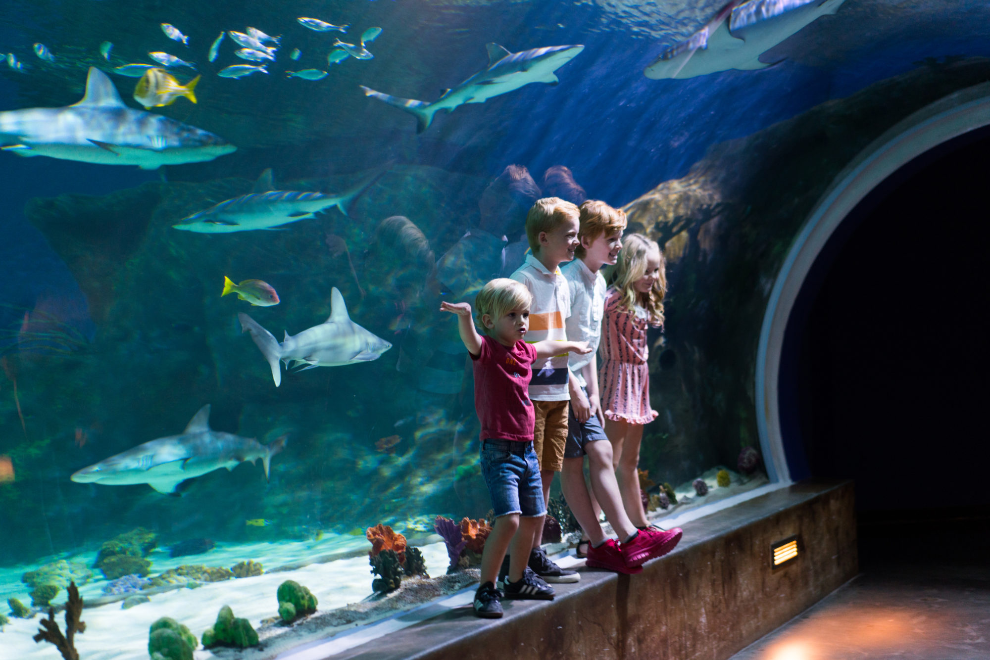 In the April Founder Series, Brent Anderson shares how he achieved a life-long dream of opening the Loveland Living Planet Aquarium.