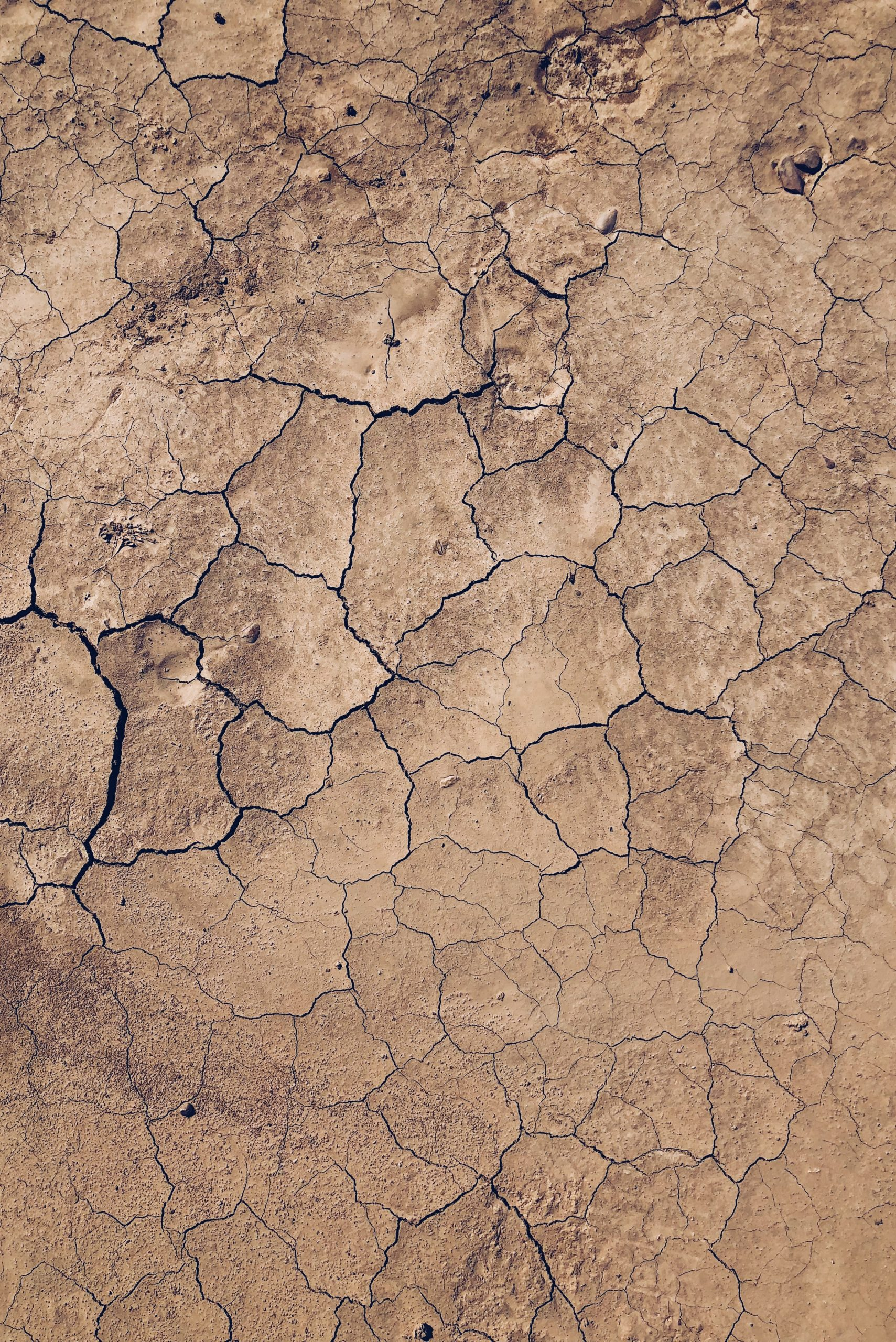The Salt Lake Chamber is calling on local businesses to help save water during this period of Utah drought.